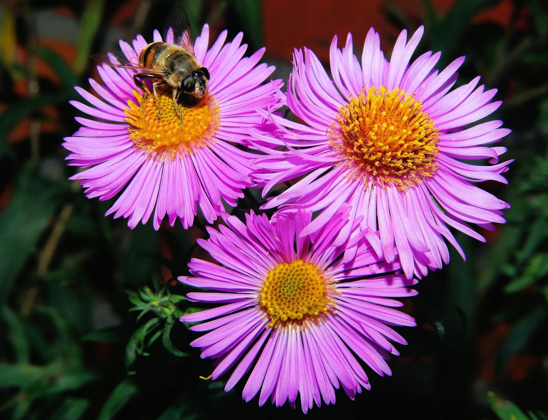 3 Pink Clustered Flowers in Close Up Shots Free Stock Images from PikWizard