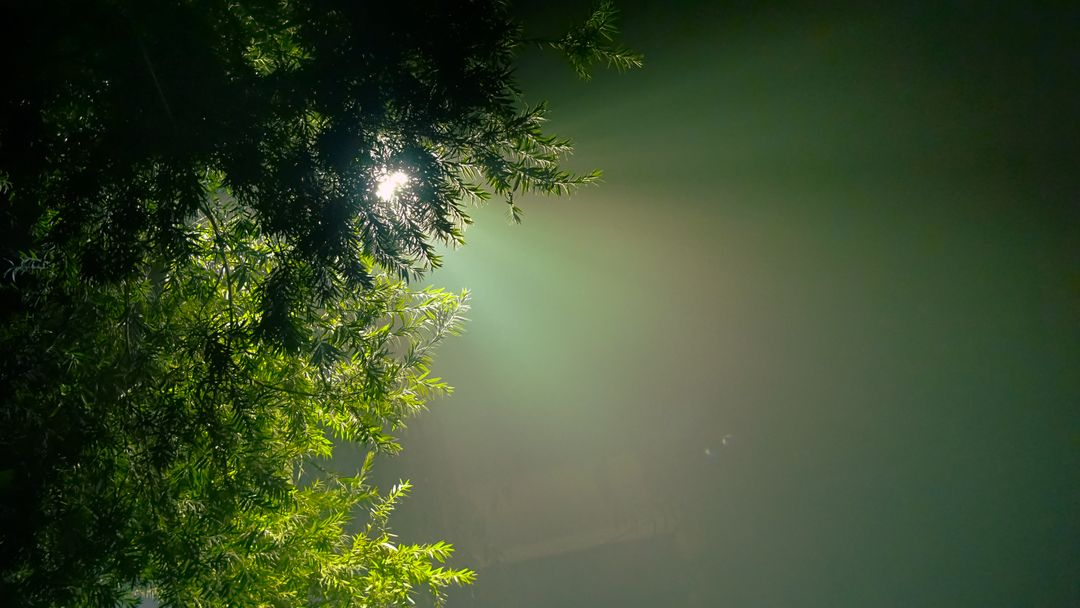 Evergreen hope hue light glare