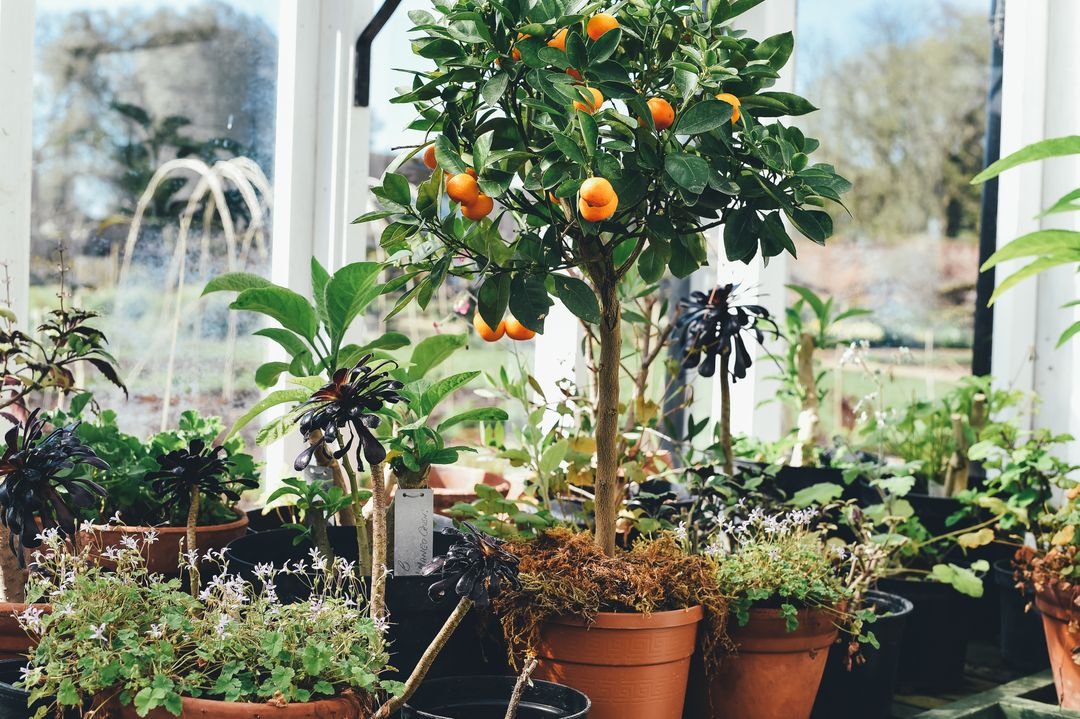 Pot Orange Container