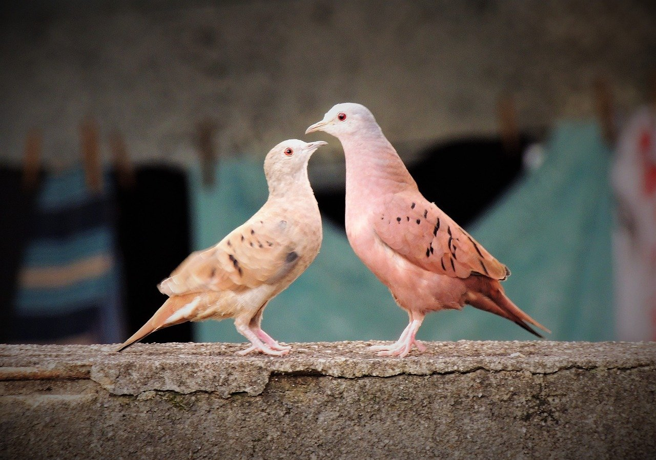 FREE dove Stock Photos from PikWizard