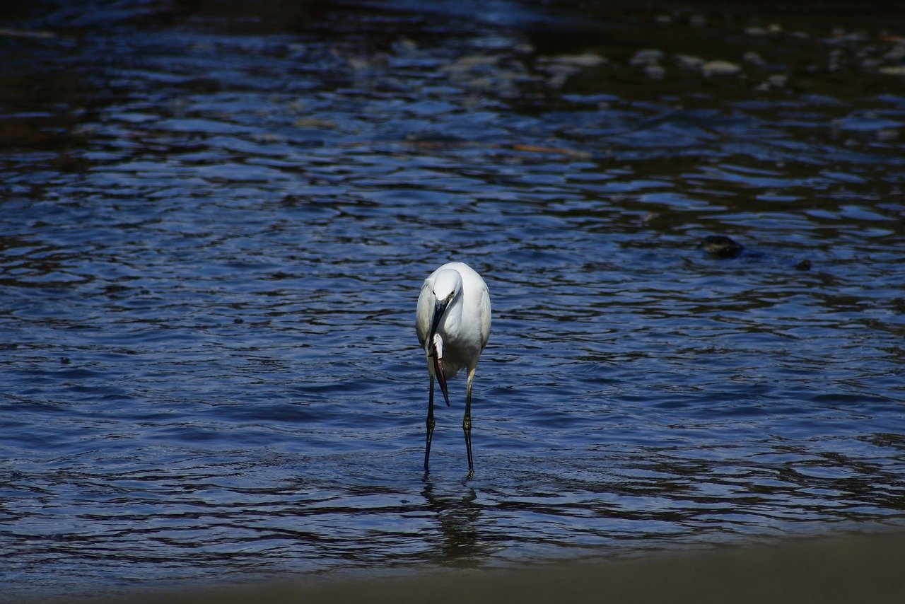 FREE spoonbill Stock Photos from PikWizard