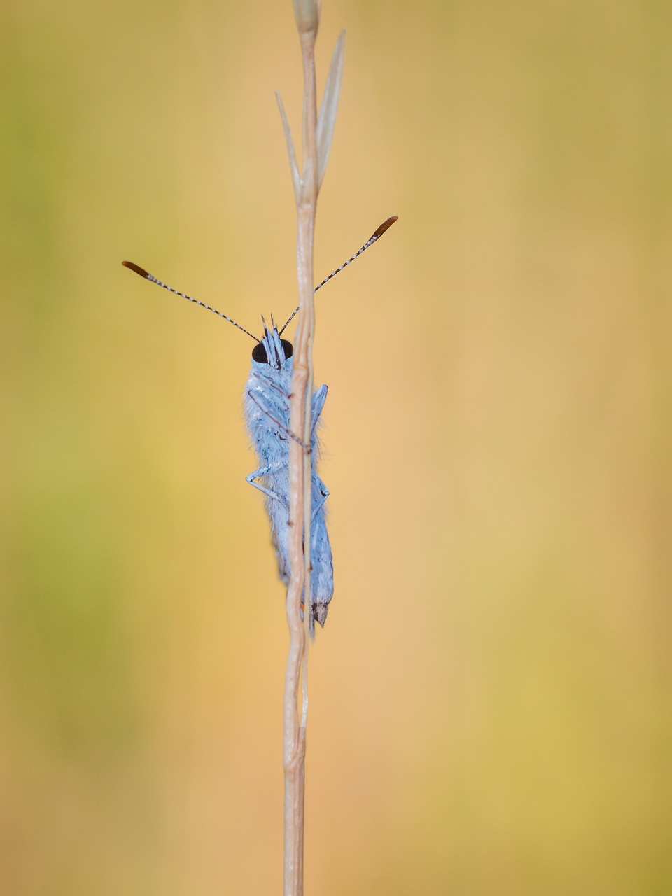 FREE insect Stock Photos from PikWizard