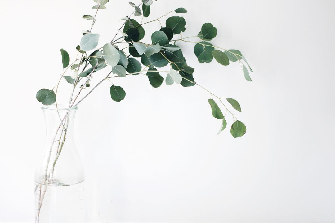 Green Leafed Plant With White Background