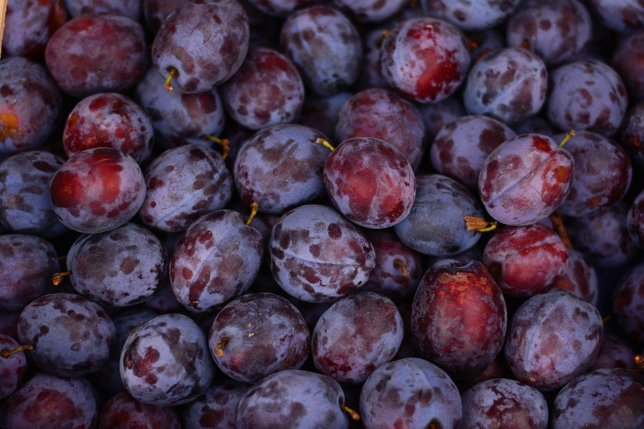FREE fruit Stock Photos from PikWizard