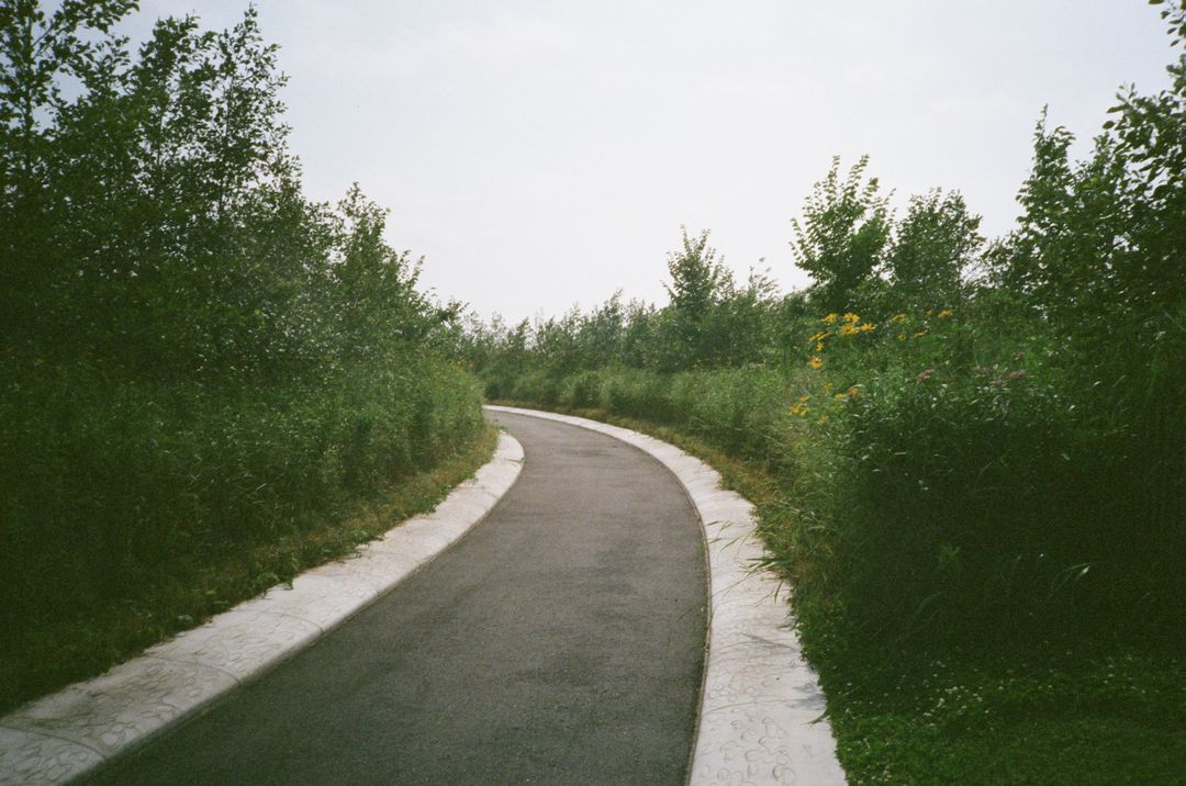 Road Way Landscape