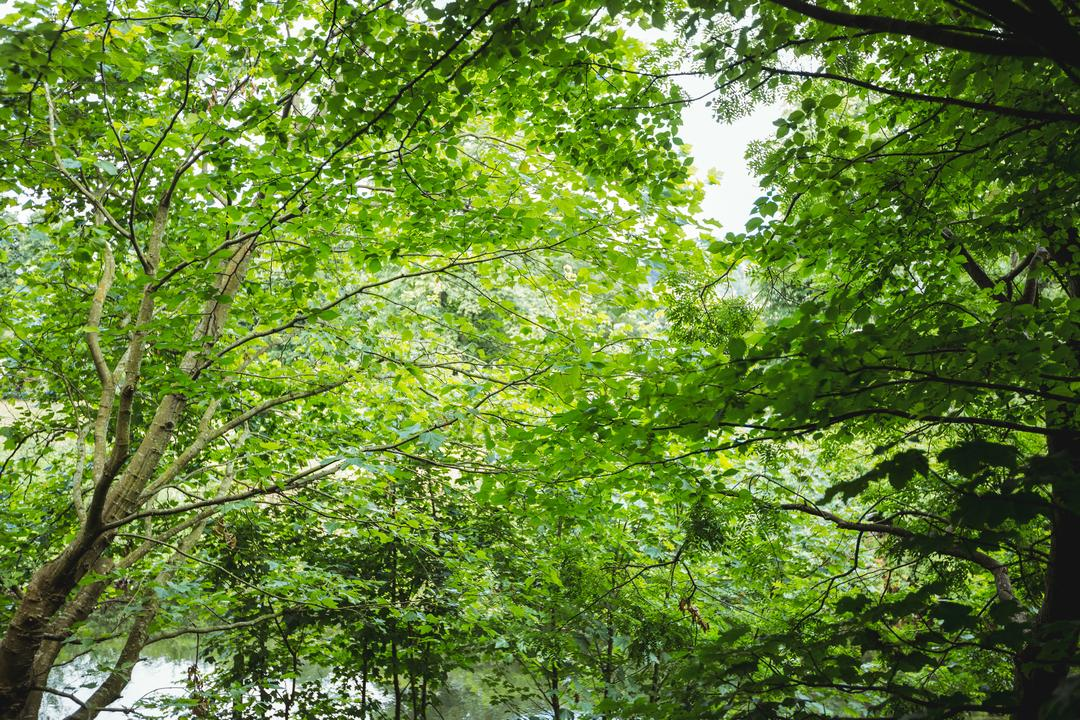 View of beautiful green forest, background Free Stock Images from PikWizard