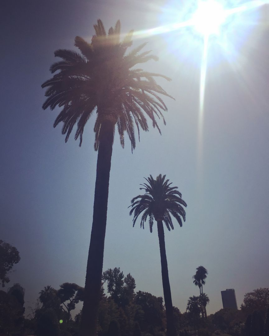 Barcelona palm trees summer sun