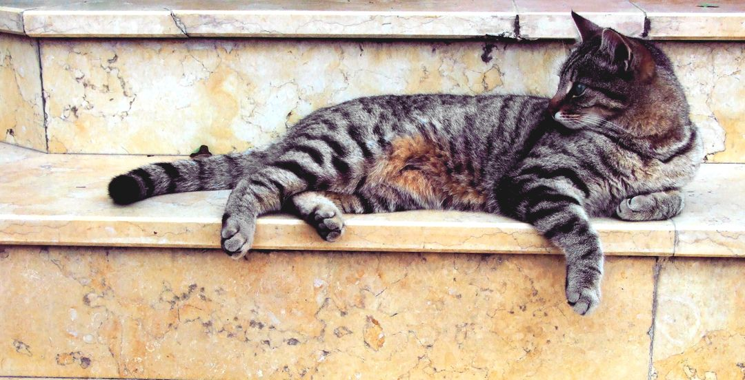 Grey Cat Lying in Marble Stairway