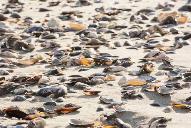 Various sea shells on sand surface