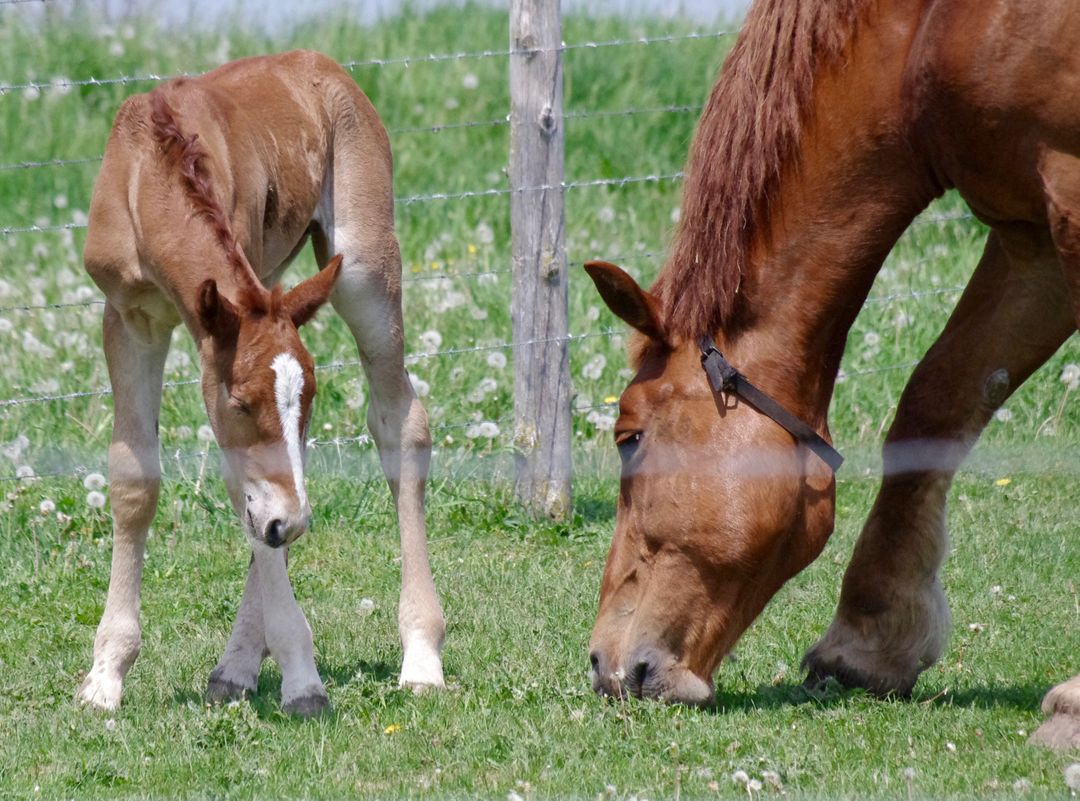 Animals barb wires close up colt