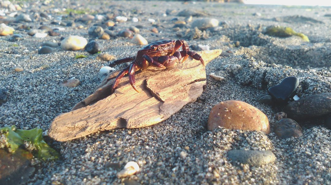 Red Crab on Brown Driftwood on Beach during Daytime