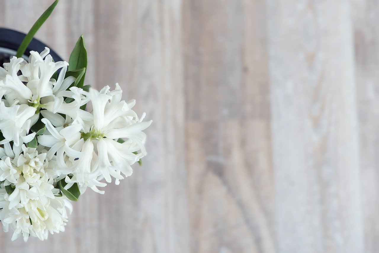 FREE flower Stock Photos from PikWizard