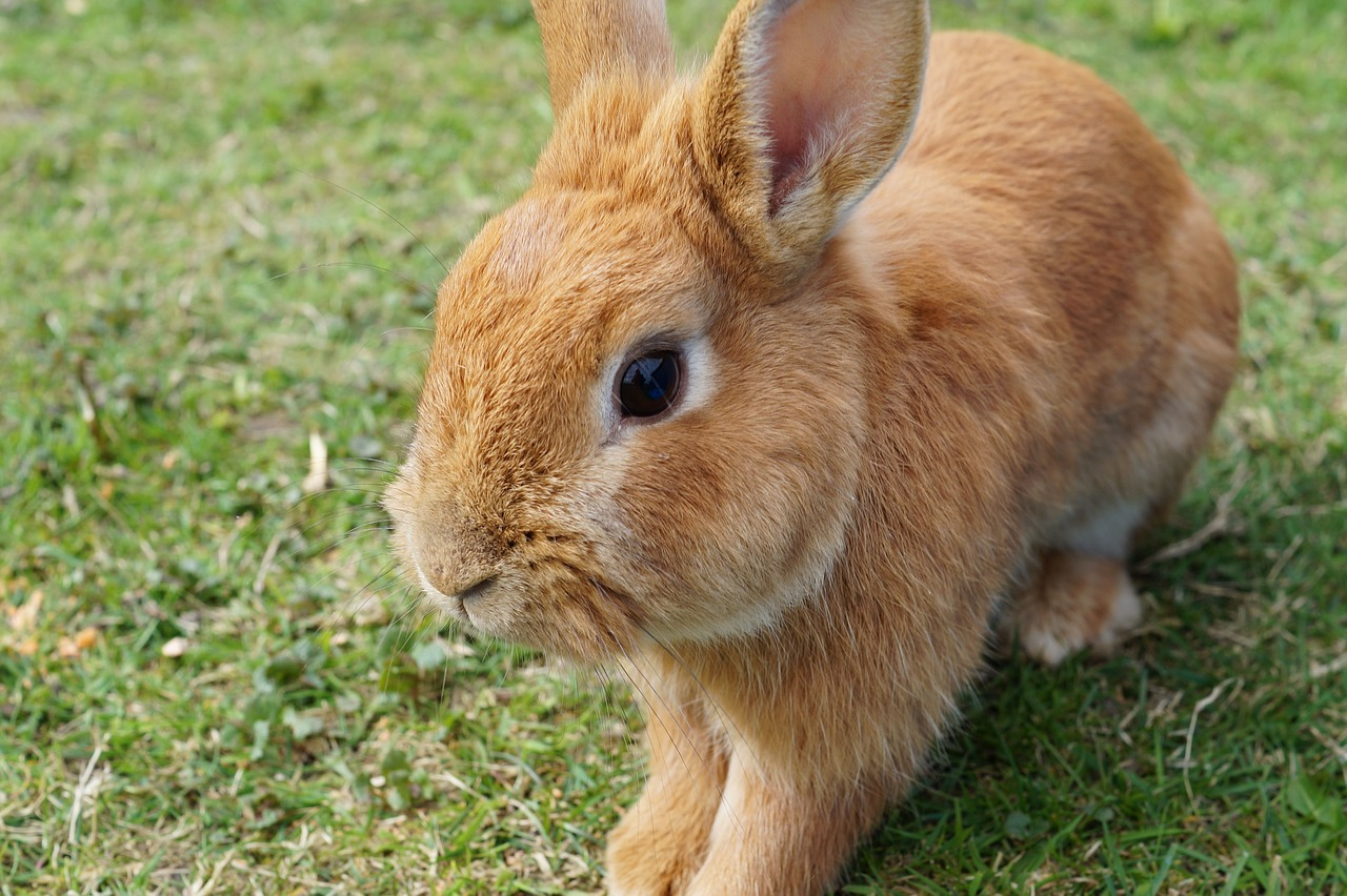 FREE rabbit Stock Photos from PikWizard