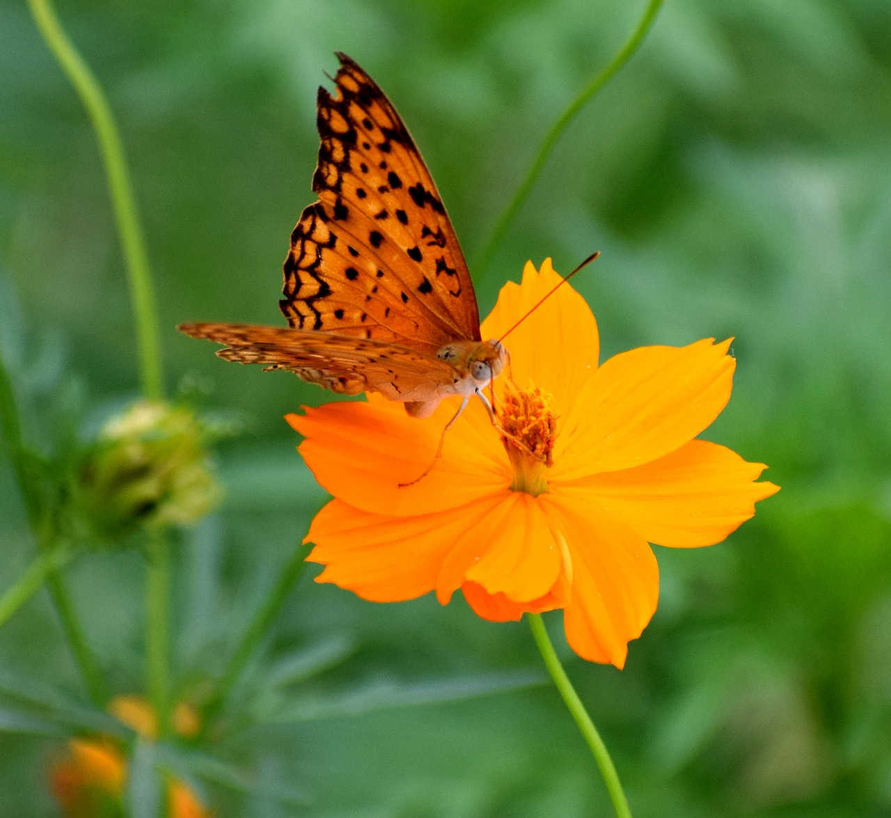 FREE butterfly Stock Photos from PikWizard