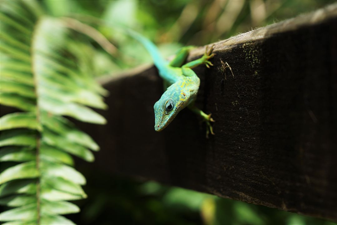 Green Lizard on Wood