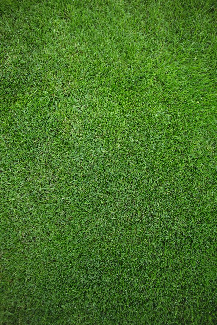 Green grass field background, full frame Free Stock Images from PikWizard
