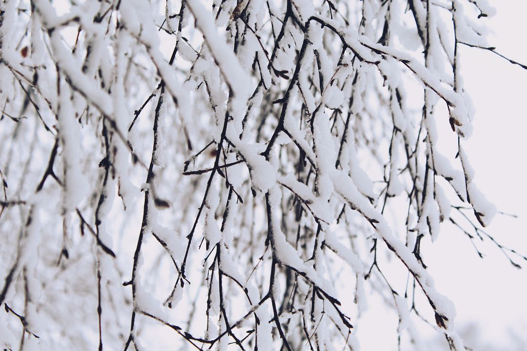 Aesthetic branch branches cold