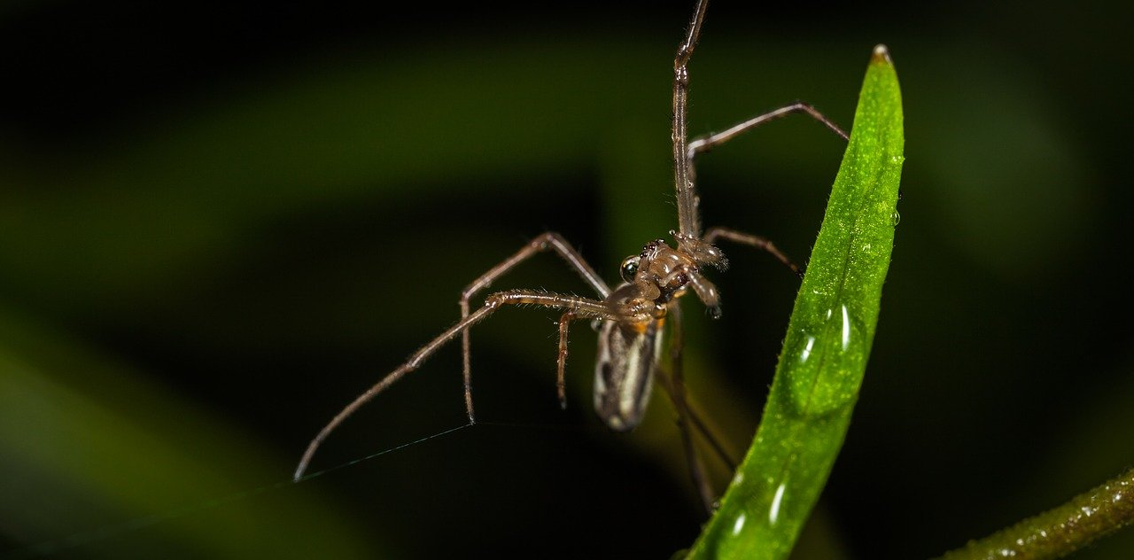 FREE mosquito Stock Photos from PikWizard