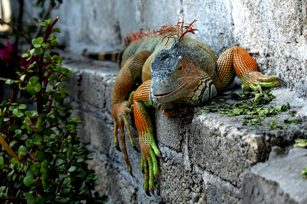 FREE lizard Stock Photos from PikWizard