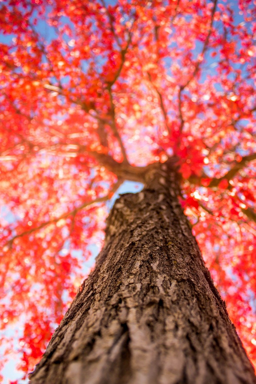 FREE tree Stock Photos from PikWizard