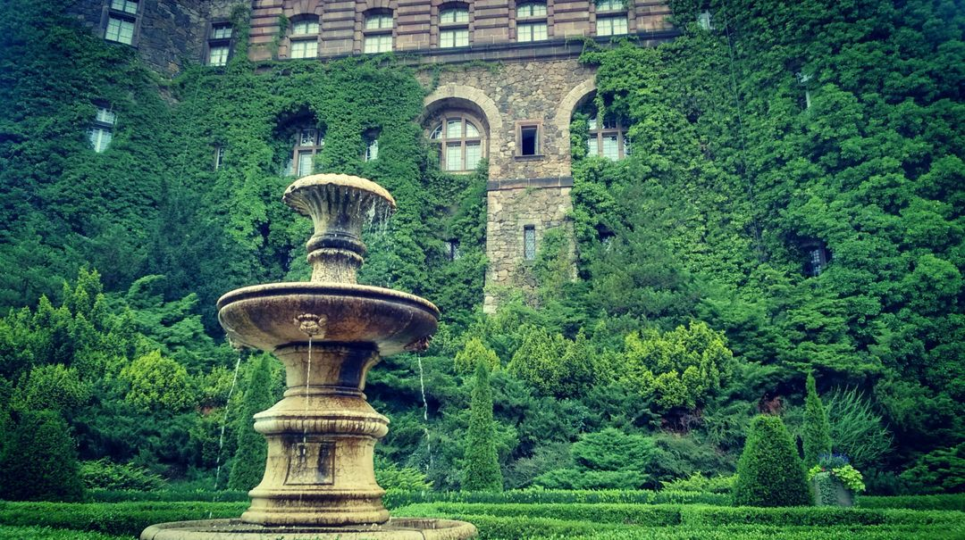 Castle fountain ivy plants