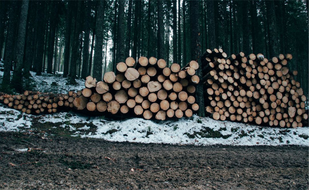 GRATIS hout Stock Photos van PikWizard