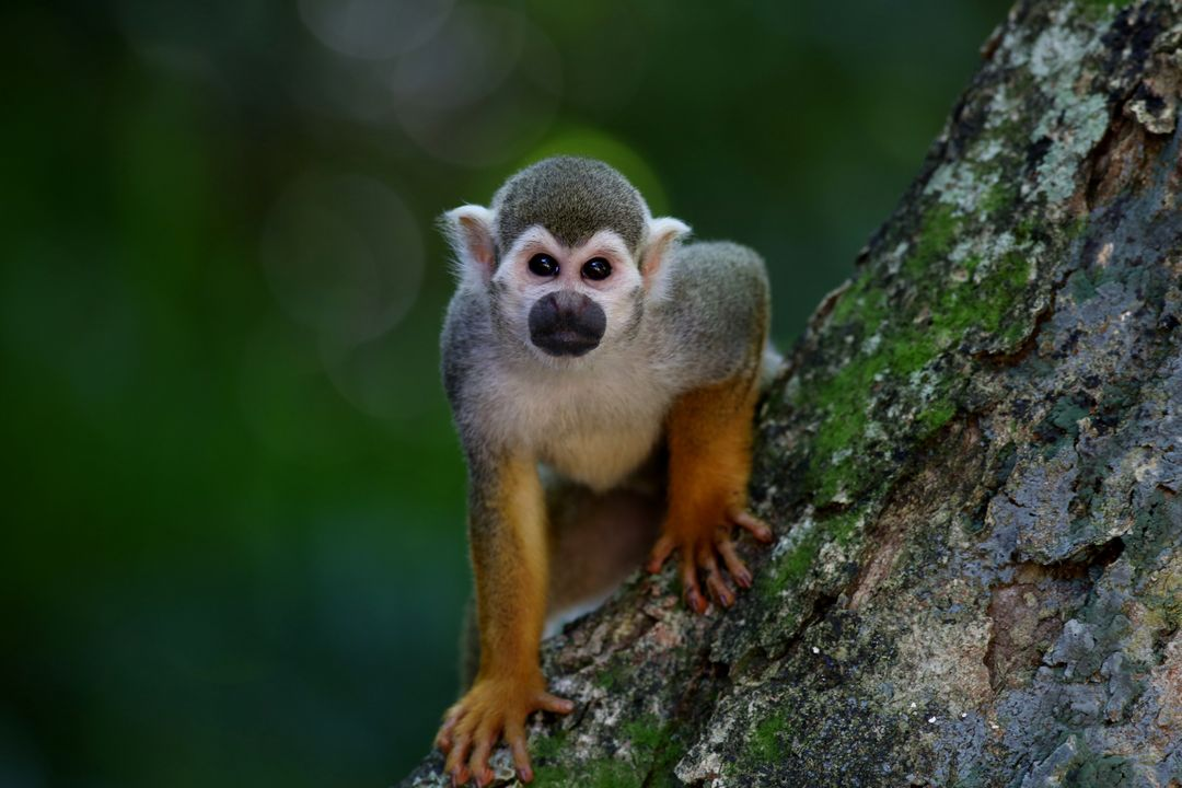 Close-up of Monkey Sitting on Tree