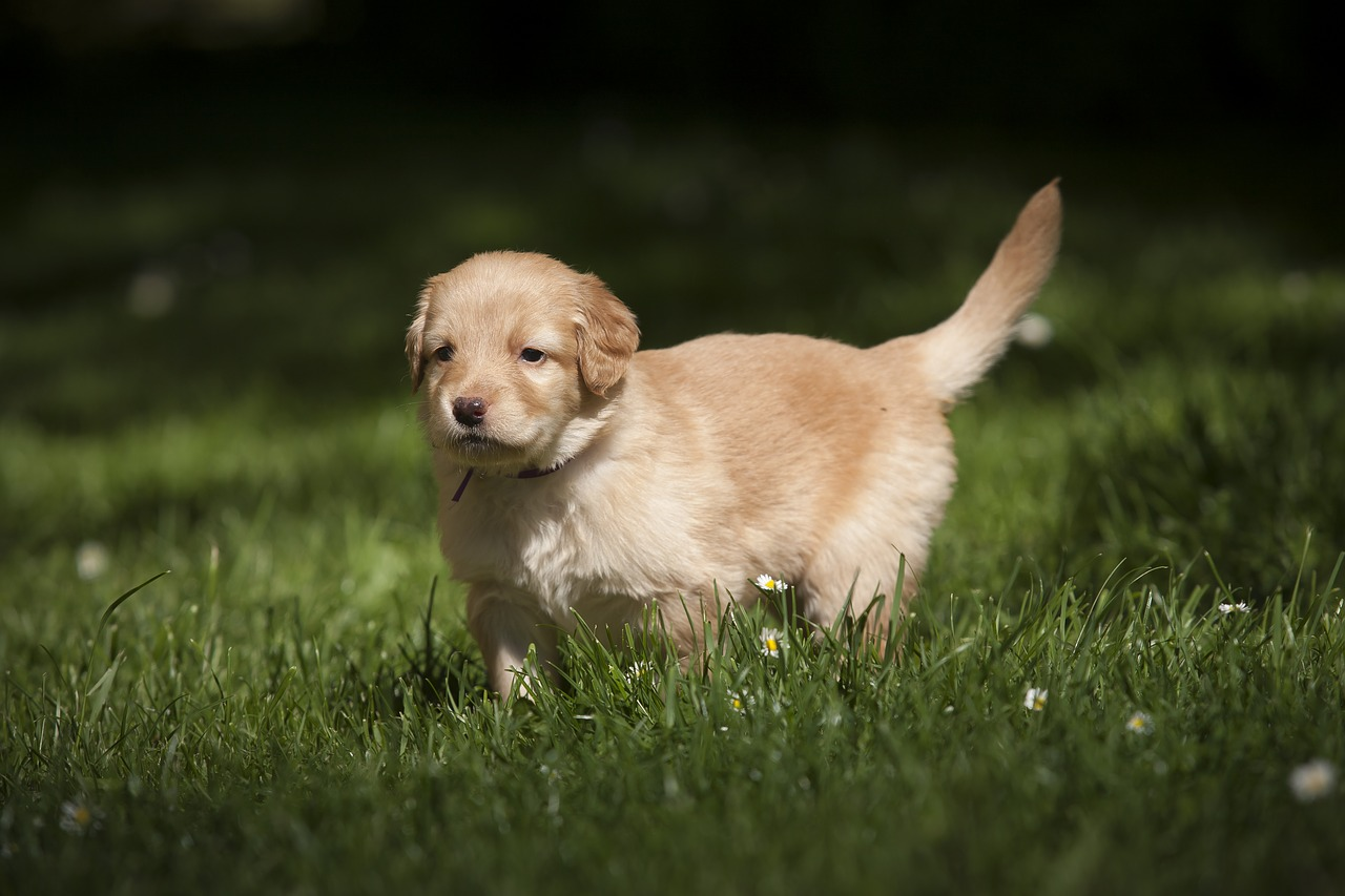 FREE dog Stock Photos from PikWizard