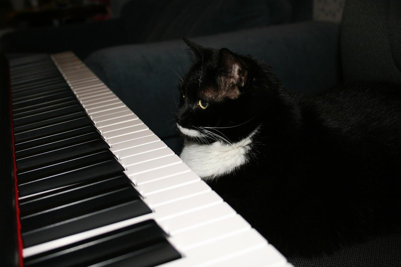 FREE piano Stock Photos from PikWizard