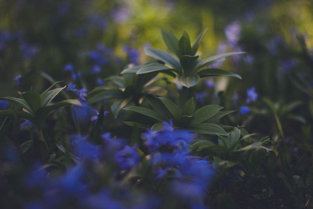 Blue Flowering Green Plaant