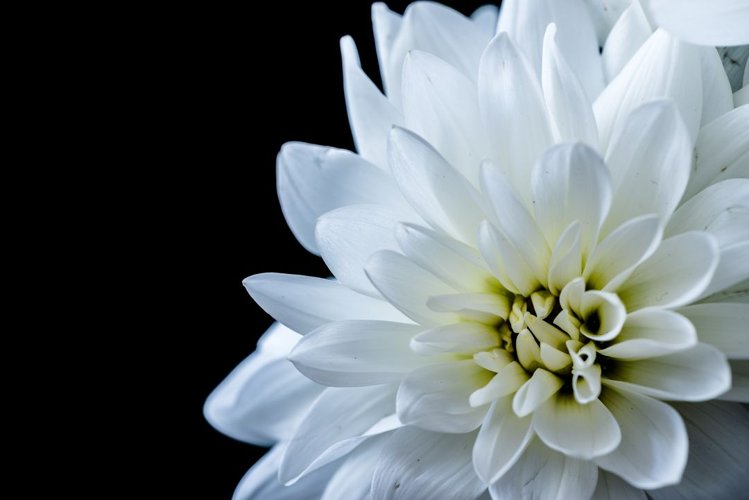 White Flower Blossom
