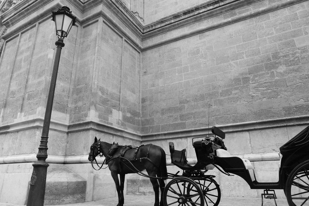 Horse carriage transport