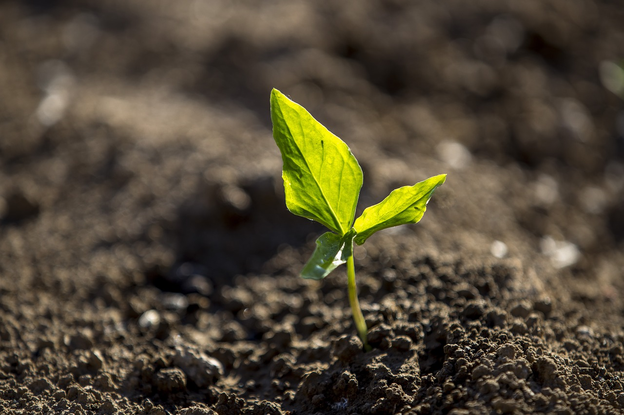 FREE seedling Stock Photos from PikWizard