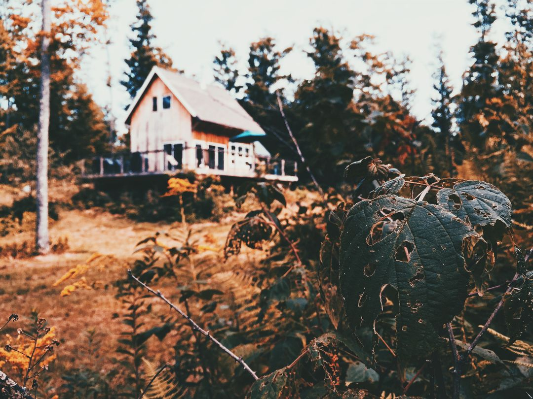 Photo of a House on a Forest