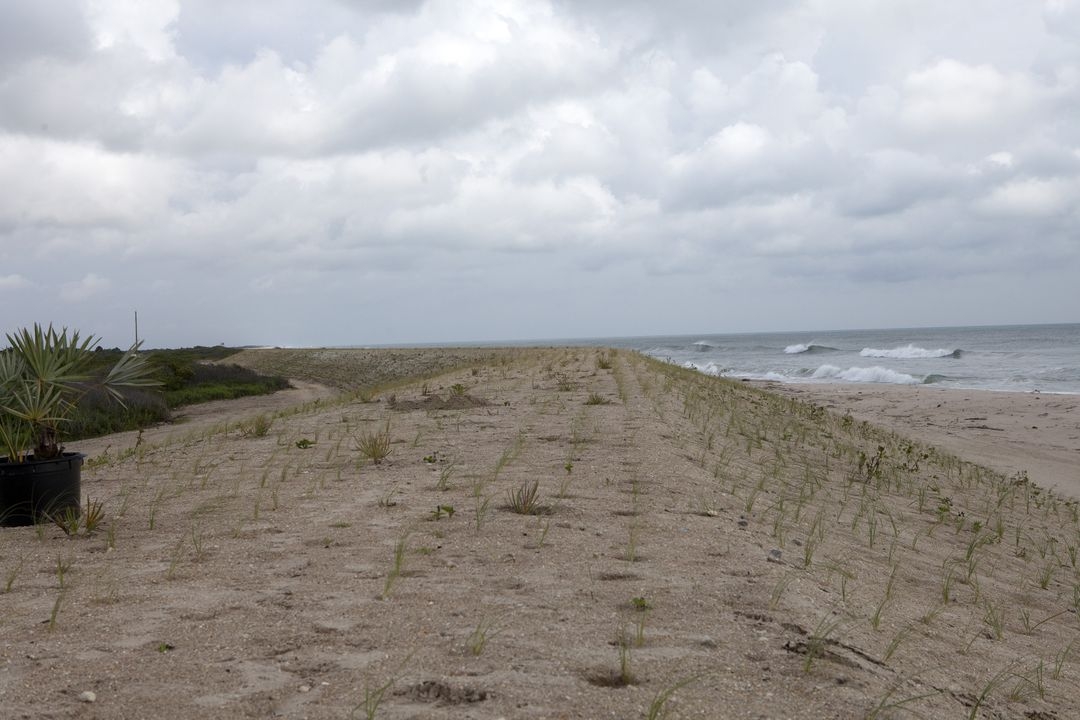 CAPE CANAVERAL, Fla. -- At the Kennedy Space Center in Florida, the sand dunes along a 1.2 mile stretch of shoreline near Launch Pads 39A and B were restored during a six-month effort using 90,000 cubic yards of sand. To help prevent future erosion, 180,000 shrubs, including grasses, sunflowers, vines, sea grapes and palmettos were planted.    Constant pounding from tropical storms, such as Hurricane Sandy in October of 2012, other weather systems and higher than usual tides, destroyed sand dunes protecting infrastructure at the spaceport. Photo credit: NASA/Dan Casper