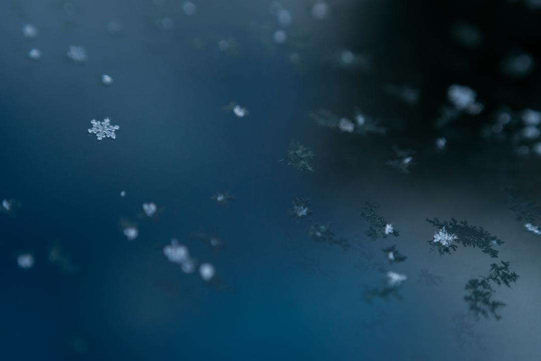 Close-up of snowflakes on the surface of lake water