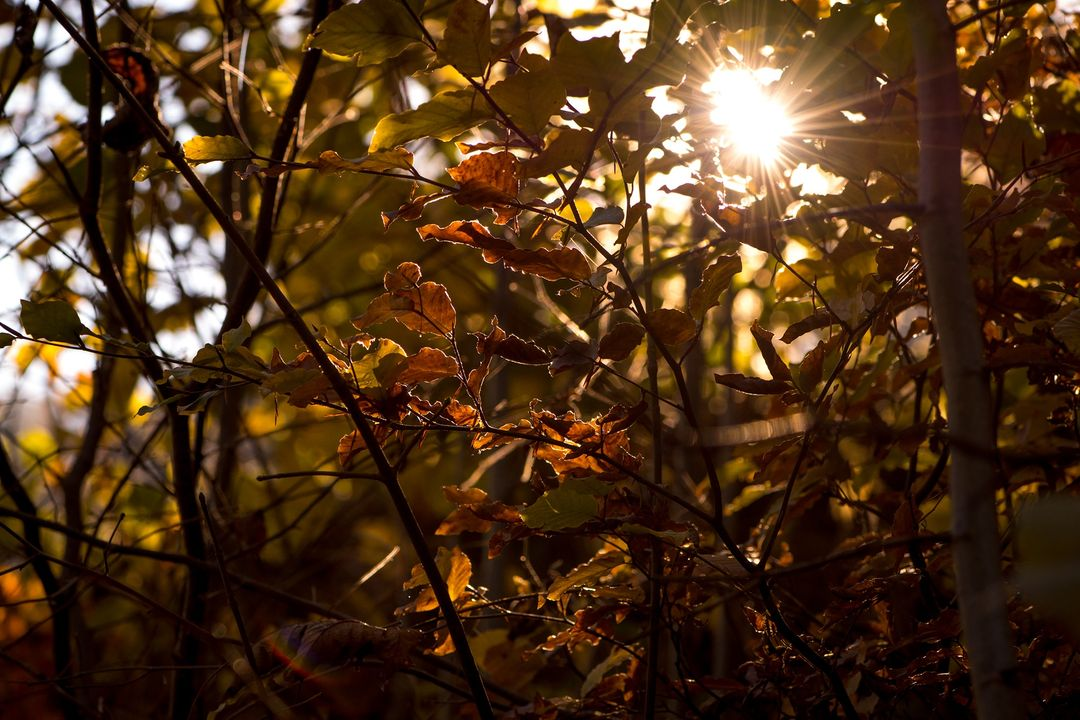 Aesthetic autumn autumn mood autumn sun