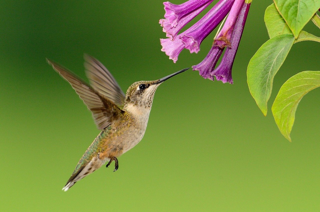 FREE hummingbird Stock Photos from PikWizard