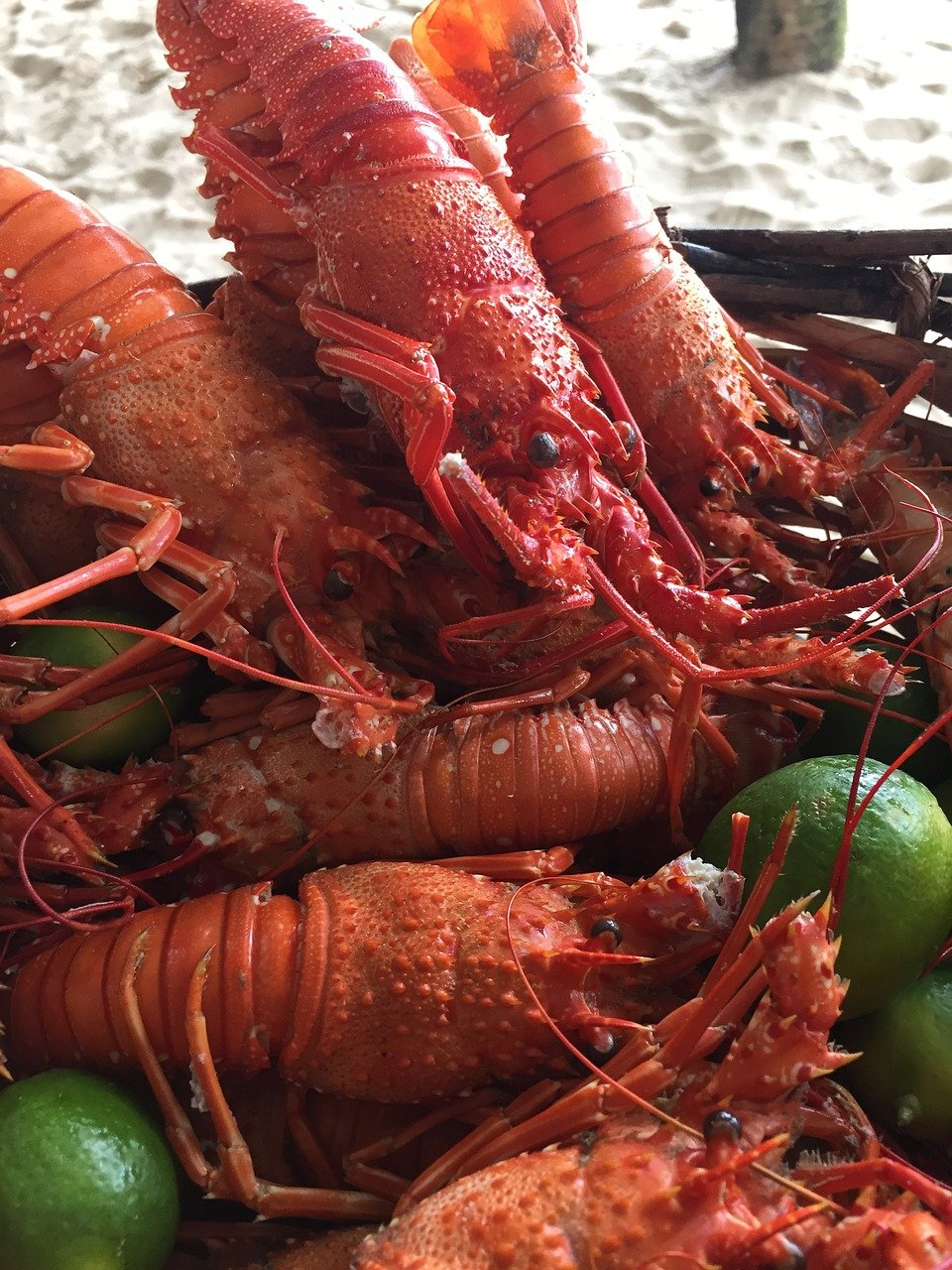 FREE crustacean Stock Photos from PikWizard
