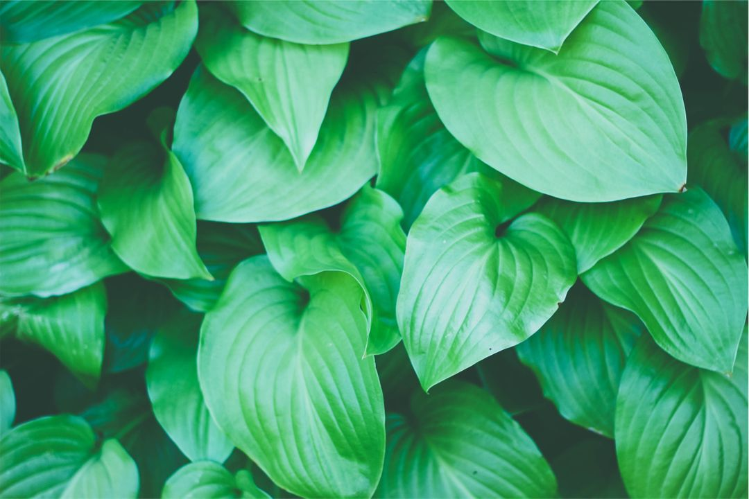 Green plants leaves