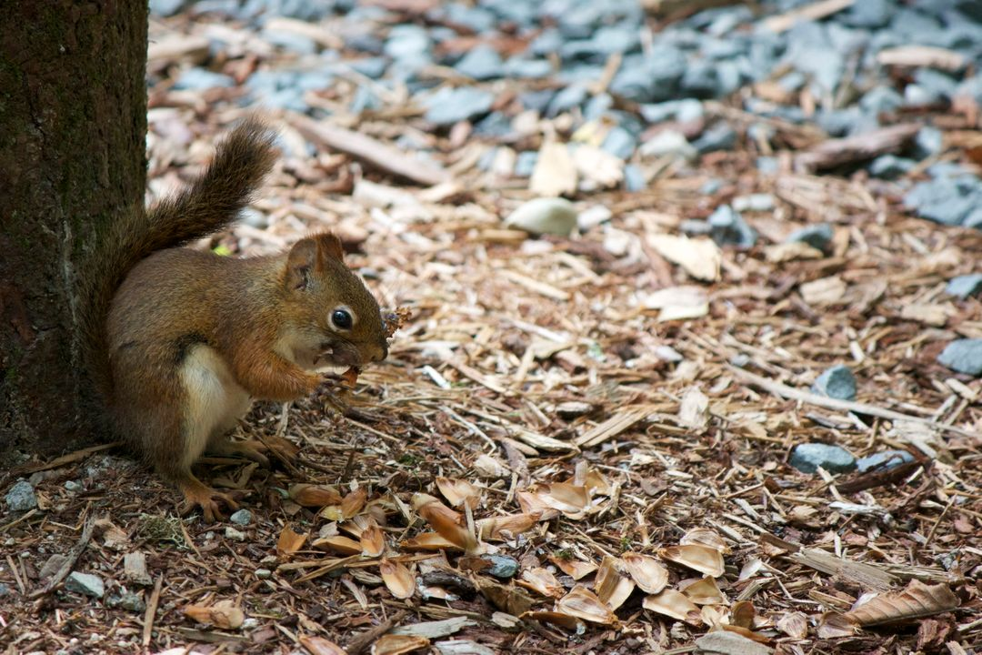 Rodent Squirrel Mammal