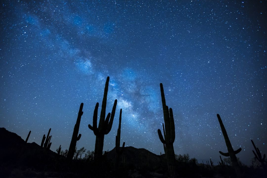 Cactus Plants Under the Starry Sky