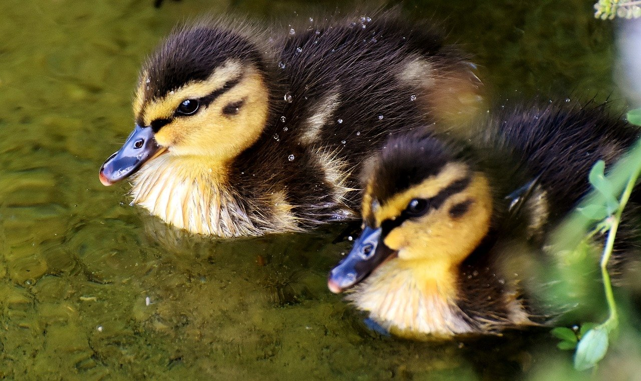 FREE nestling Stock Photos from PikWizard