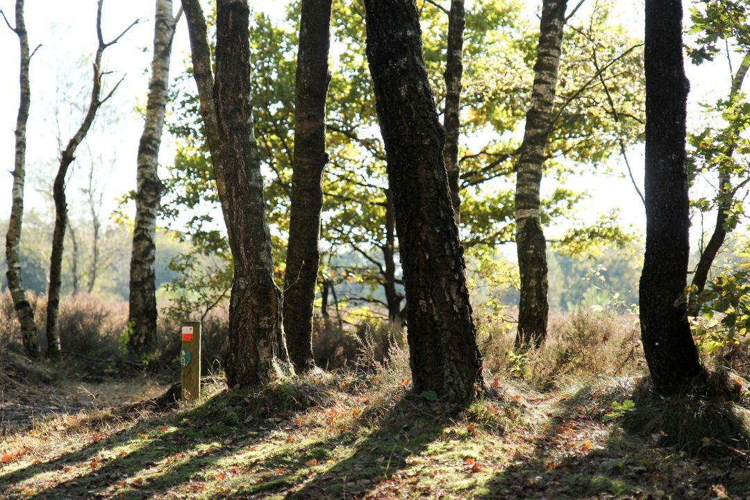 Tree Forest Oak Free Stock Images from PikWizard