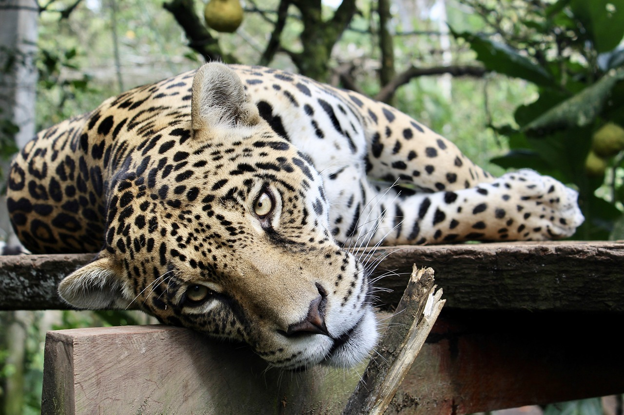 FREE jaguar Stock Photos from PikWizard