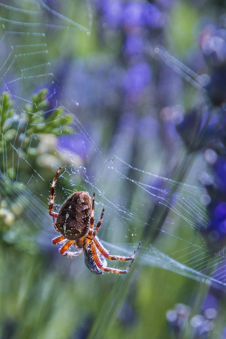 FREE spider Stock Photos from PikWizard