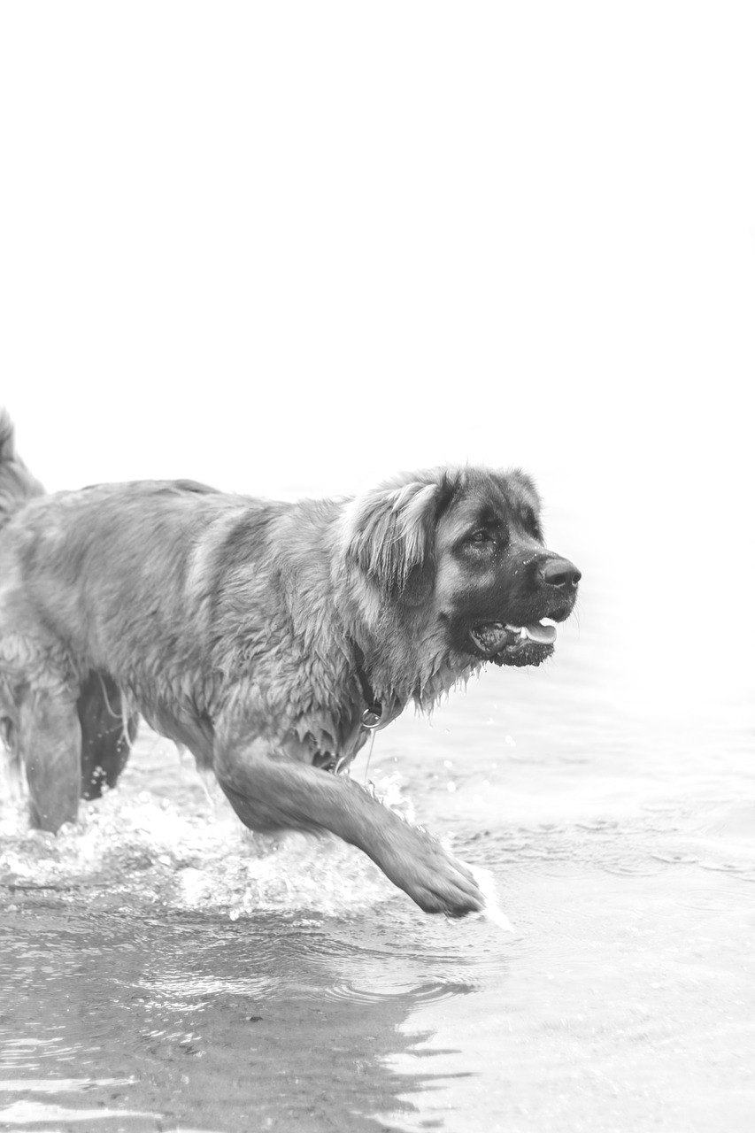 FREE canine Stock Photos from PikWizard