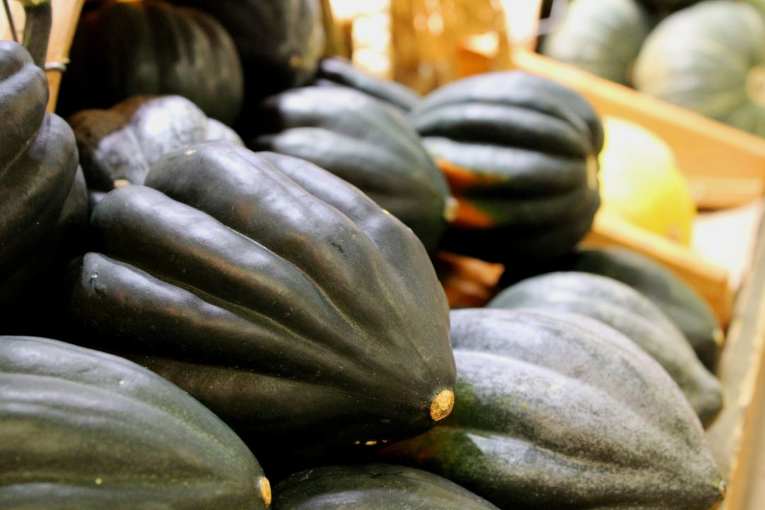 Acorn squash autumn food harvest