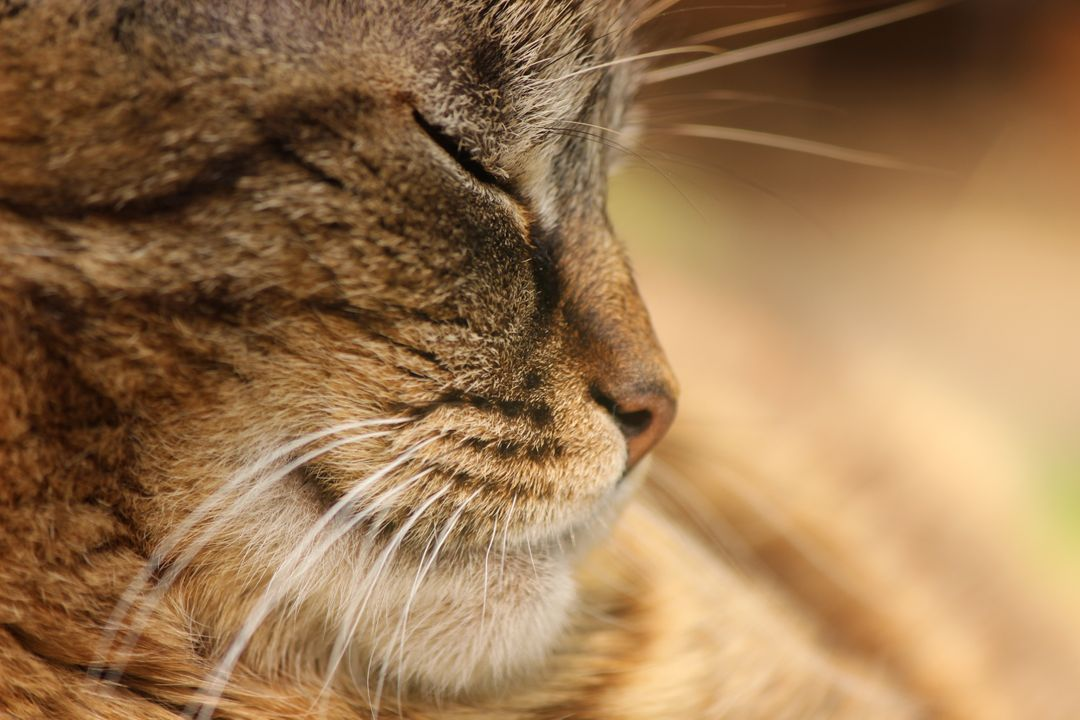 Animal animal portrait brown cat