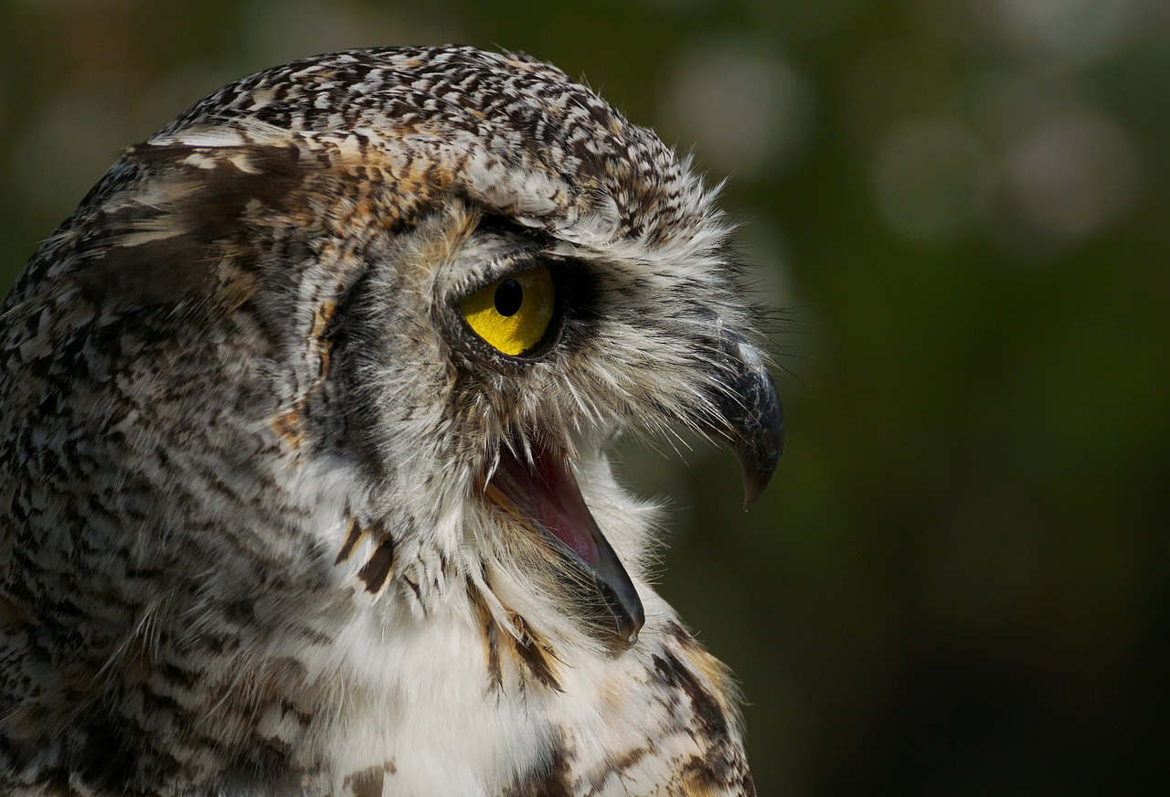 FREE owl Stock Photos from PikWizard